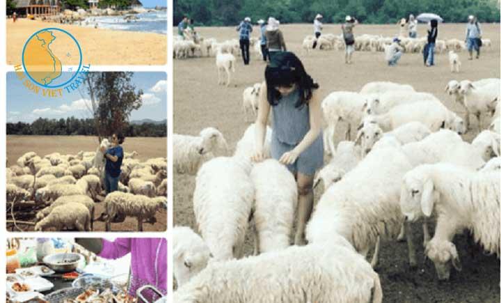Tour Long Hải - Khám Phá Vườn Rau - Nông Trại Cừu 1 ngày 1