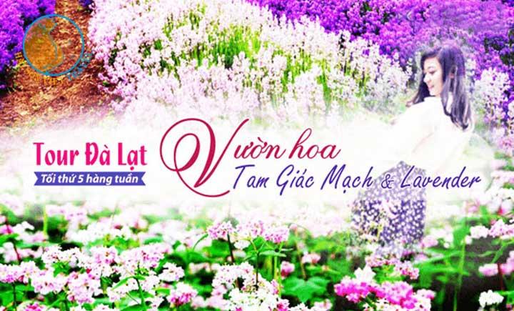 Tour Đà Lạt - Vườn hoa Tam Giác Mạch và Lavender 3 ngày 3 đêm